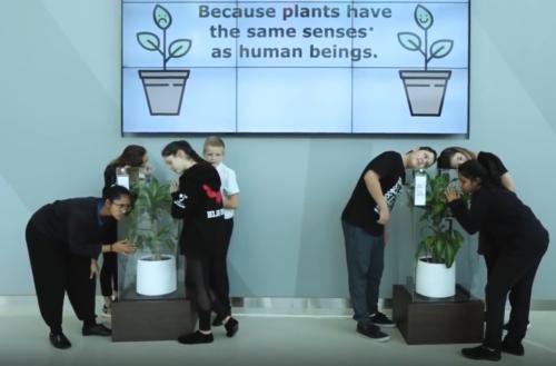 piante coscienti